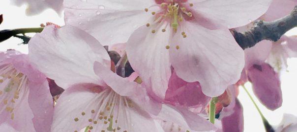 Bloom Me Spring